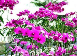 KIM IL SUNG Blumen 1